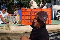 Dia Bersusah Payah Berjuang untuk Keluar dari Banjir dengan Anjing yang Besar di Pundaknya