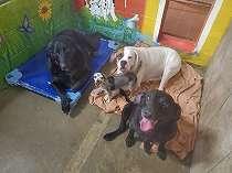 4 Anjing yang Pemiliknya Meninggal Karena COVID-19 Sedang Mencari Rumah Baru    Bersama