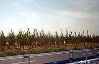 Sering Badai Pasir, Gurun di China Ditanami Pepohonan