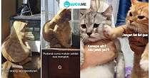 10 Meme Lucu 'Kucing Insecure' Ini Bikin Ngakak Gemoy