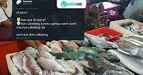 10 Meme 'Asal Usul Ikan' Ini Ngasalnya Bikin Ngakak