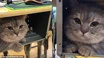 Viral Kisah Kucing Disembunyikan Kucing di Dalam Laci Kelas, Tetap Anteng Saat Pelajaran Berlangsung