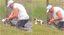 VIDEO Pria Tua Selamatkan Anak Anjingnya dari Terkaman Aligator, Hanya dengan Tangan Kosong