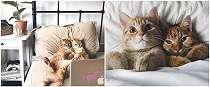 7 Potret tingkah aneh kucing, bikin geleng-geleng kepala