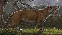 Fosil 'singa raksasa' ditemukan di laci sebuah museum di Kenya