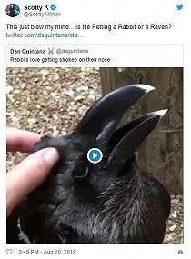 Ilusi Optik Bikin Banyak Orang Salah Tebak, Ini Kelinci atau Burung Gagak?