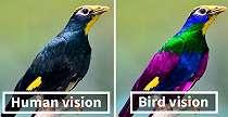 Begini Cara Burung Melihat Dunia, Manusia Kalah Telak!