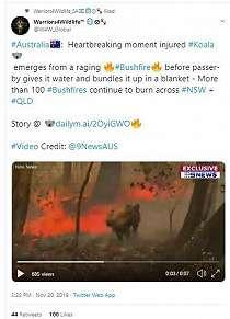 Heroik! Perempuan Ini Menyelamatkan Koala di Tengah Kebakaran Hutan