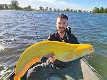 Pemancing di Belanda Mendapatkan Ikan Lele Kuning Cerah yang Sangat Langka