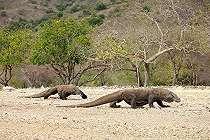 Tagar Save Komodo Menggema, 5 Wisata Ini Wajib Dikunjungi