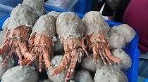 Viral Bakso Lobster di Pontianak, Pembelinya Antre